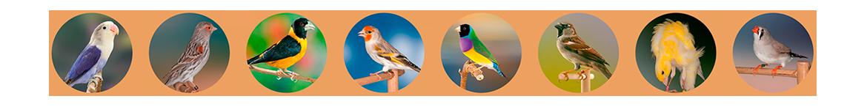 El mejor cuidado para tus pájaros